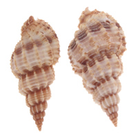Trompeta natural Shell colgantes