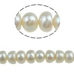 Spłaszczone koraliki z pereł słodkowodnych hodowlanych, Perła naturalna słodkowodna, biały, 6-7mm, otwór:około 0.8mm, sprzedawane na 15 cal Strand