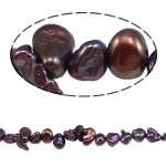 Reborn Cultured Freshwater Pearl Beads, dark purple, 6-8mm, Hole:Approx 0.8mm, Sold Per Approx 15 Inch Strand