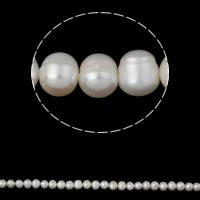 Ziemniakowe koraliki z hodowlanych pereł słodowodnych, Perła naturalna słodkowodna, Naturalne, biały, 7-8mm, otwór:około 0.8mm, sprzedawane na około 15.7 cal Strand