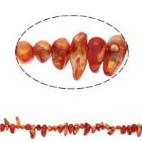 Biwa Cultured Freshwater Pearl Beads, reddish orange, 9-25mm, Hole:Approx 1mm, Sold Per Approx 14.5 Inch Strand