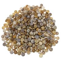 камень хризантема кабошон, Колпак, плоской задней панелью, 8x4mm, 10ПК/Лот, продается Лот