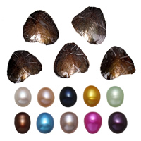 Freshwater Cultured Love Wish Pearl Oyster Rice mixed colors 7.5-8mm Sold By Lot