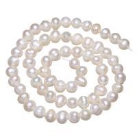 Akoya культивированный жемчуг, Акойя культивированные жем, Круглая, натуральный, белый, 5.5-6mm, отверстие:Приблизительно 0.8mm, Продан через Приблизительно 15.7 дюймовый Strand
