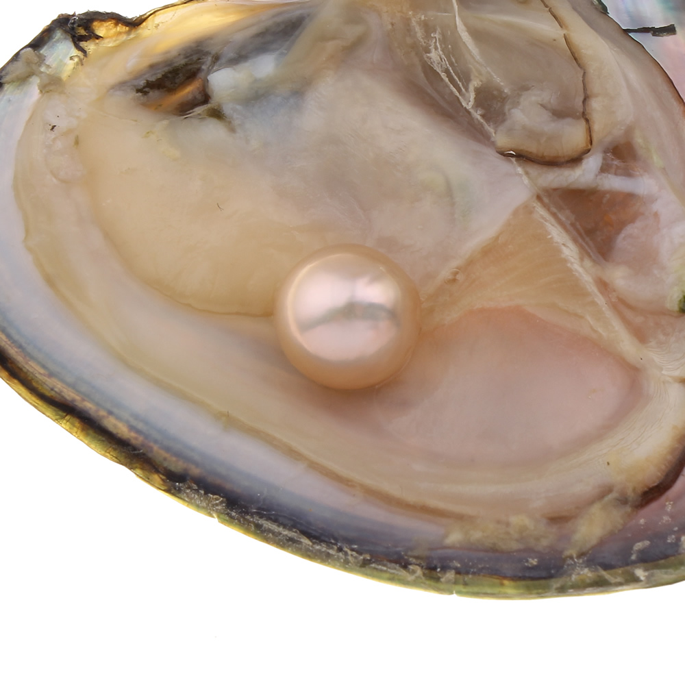 wish pearl pearl oyster pearl in oyster freshwater